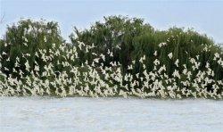 Birds over water