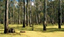 barmahforest-w250