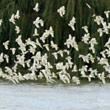 t_birds-over-water